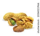 fresh walnut  nutritious... | Shutterstock .eps vector #1036021966