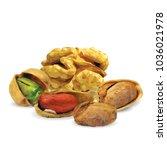 fresh walnut  nutritious... | Shutterstock .eps vector #1036021978