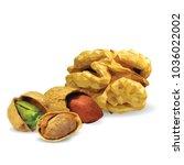 fresh walnut  nutritious... | Shutterstock .eps vector #1036022002