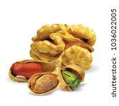 fresh walnut  nutritious... | Shutterstock .eps vector #1036022005