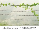 Small photo of Grass, creeping along the lines of barbed wire at the home and agricultural field.