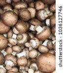champignon royal mushrooms.... | Shutterstock . vector #1036127746