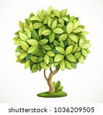 green decorative little tree... | Shutterstock .eps vector #1036209505