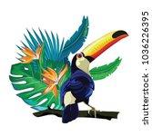 toucan  exotic birds  tropical...   Shutterstock .eps vector #1036226395