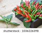 chilli padi  bird's eye chilli  ... | Shutterstock . vector #1036226398