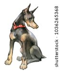 Hand Drawn Painting Of Doberma...