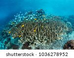 colorful reef fish swim above... | Shutterstock . vector #1036278952