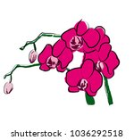 orchid on a white background... | Shutterstock . vector #1036292518