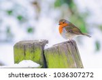 Little Robin Redbreast In...