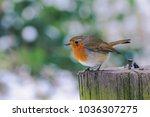 Little Robin Redbreast In...