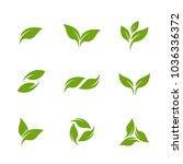 leaves set logo vector template | Shutterstock .eps vector #1036336372