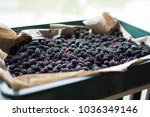 mulberry fruit at sunny day.... | Shutterstock . vector #1036349146