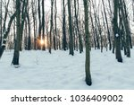 sunset in the forest | Shutterstock . vector #1036409002