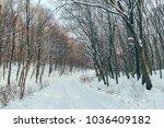 winter road in forest. | Shutterstock . vector #1036409182