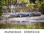 large saltwater crocodile ... | Shutterstock . vector #103641116