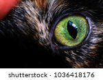 Stock photo cat s eye close up 1036418176