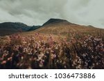 wildflowers field with... | Shutterstock . vector #1036473886