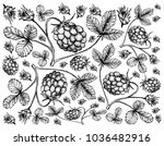berry fruit  illustration... | Shutterstock .eps vector #1036482916