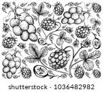 berry fruit  illustration hand... | Shutterstock .eps vector #1036482982