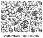 berry fruit  illustration hand... | Shutterstock .eps vector #1036482982