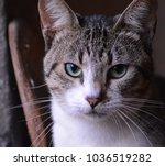 beautiful feline eyes | Shutterstock . vector #1036519282