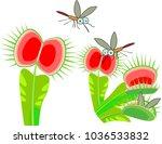 venus flytrap or dionaea... | Shutterstock .eps vector #1036533832