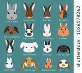 rabbits breeds set | Shutterstock .eps vector #1036578262