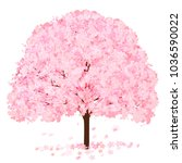 cherry blossoms spring flower... | Shutterstock .eps vector #1036590022