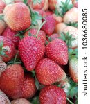 fresh strawberries from the... | Shutterstock . vector #1036680085