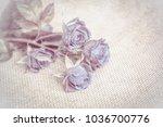 beautiful rose soft blue flower ...   Shutterstock . vector #1036700776