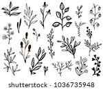 set of hand drawn leaves ... | Shutterstock .eps vector #1036735948