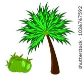 coconut tree with coconut you...   Shutterstock .eps vector #1036767592