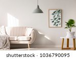 botanic poster in natural ... | Shutterstock . vector #1036790095