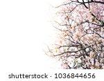 pink trumpet tree | Shutterstock . vector #1036844656