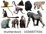 Set Of Primates Isolated On...