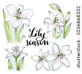 lily flowers vector set drawn... | Shutterstock .eps vector #1036868332
