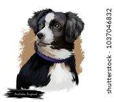 australian shepherd dog breed... | Shutterstock . vector #1037046832