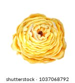 watercolor yellow terry flower | Shutterstock . vector #1037068792