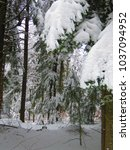 Small photo of forest in winter, ind dark day after heavy snowfall