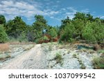 forest trail in the mountains... | Shutterstock . vector #1037099542