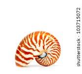 Nautilus Shell Isolated On...
