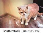 cute little kitten sitting  in... | Shutterstock . vector #1037190442