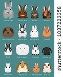 rabbits breeds chart | Shutterstock .eps vector #1037223358