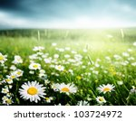 field of daisy flowers | Shutterstock . vector #103724972