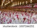 Poultry Farm Business For The...