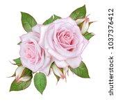 floral background.bouquet ... | Shutterstock . vector #1037376412