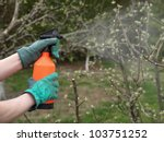 Spraying The Trees In Orchard...