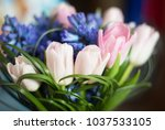 tulips and hyacinth flowers....   Shutterstock . vector #1037533105