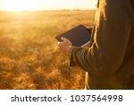 Farmer Checking Wheat Field...