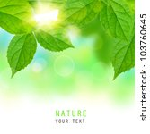 fresh green leaves on a blurred ... | Shutterstock . vector #103760645